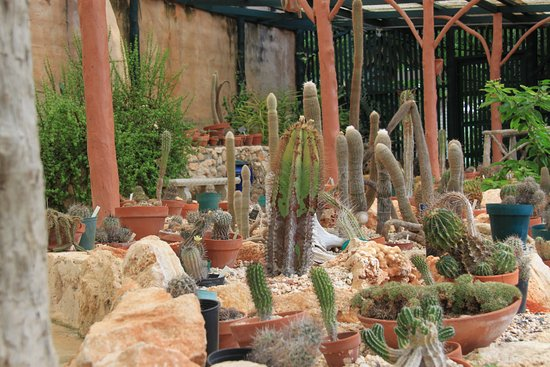 bbg-cacti