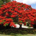 Bermuda Botanical Gardens – a Treat for All Visitors to the Islands