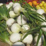 Bermuda Sweet Onions